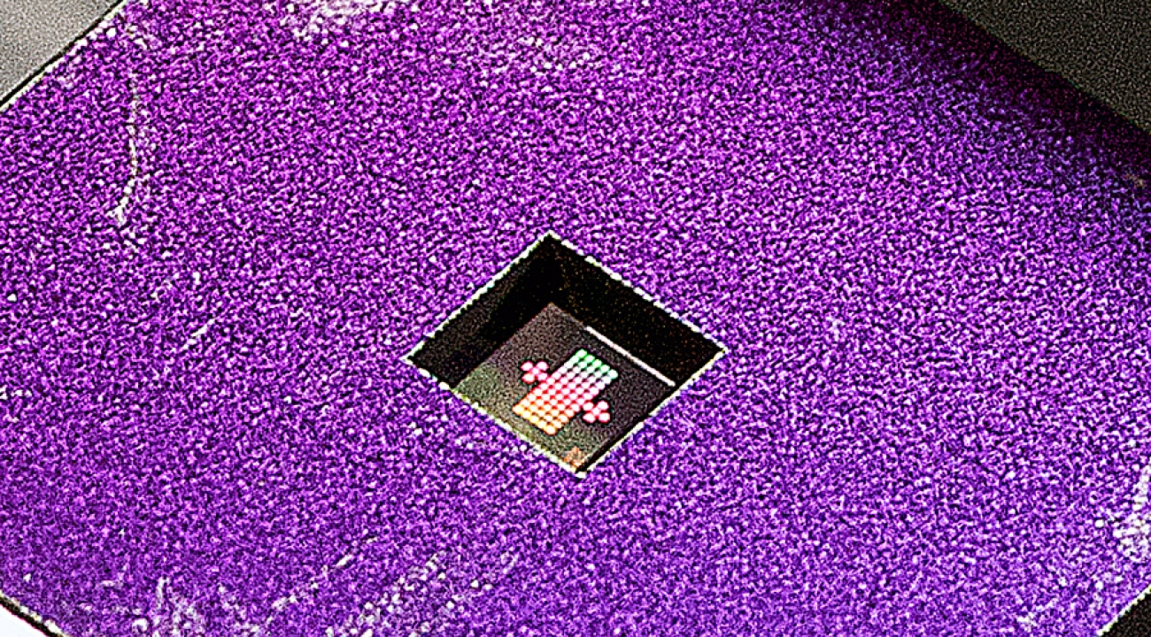 n the cut-out area of the purple mount, a silicon nitride membrane (which measures 1.2 mm X 1.2 mm) holds an array of gratings