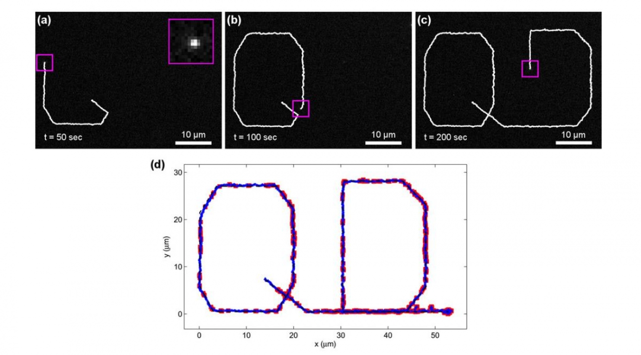 Figure 3. (a-c) Camera images of a single quantum dot being steered along the desired trajectory. The white trace shows the measured path of the quantum dot up until its current location.  (d) Plot of quantum dot position along its trajectory. The dotted black line shows the desired trajectory programmed into the controller. The actual measured QD trajectory is shown in blue. The solid red squares depict when the quantum dot blinks off. At the end of the trajectory the QD is held in place for 2 minutes.